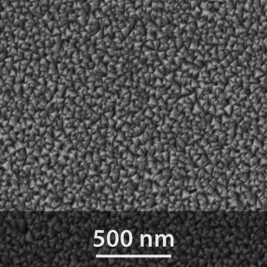 sem-image-of-the-PA01-surface
