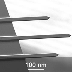 SEM image of 3 tipless AFM cantilevers on CSC series chip
