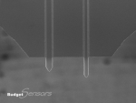 Top view SEM image of All-In-One-Tipless (AIO-TL) AFM cantilevers C&D