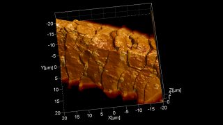 Contact mode topography image rendered in 3D and overlaid with the Lateral Force Microscopy image showing nicely the scales' morphology as well as some hairspray droplets.